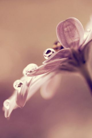 Lomo Elegant Flowers