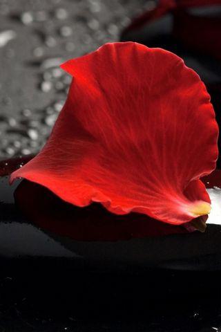 Пелюстки з червоної троянди