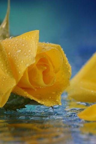 노란 꽃잎
