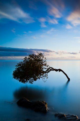 Tree In Water