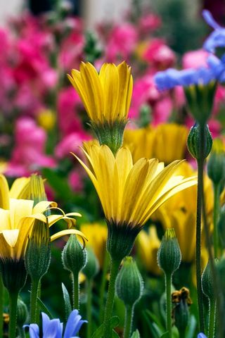 Vail-Flowers