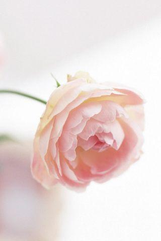 Cherrish Rose