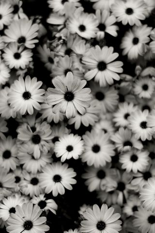 Black-and-white-flowers