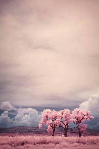 Blossam