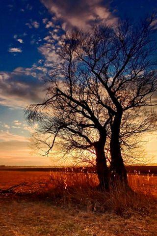 Pohon Silhoutte
