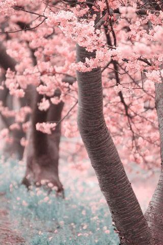 شجرة وردي