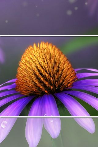 Daisy - Lock Screen - IP4