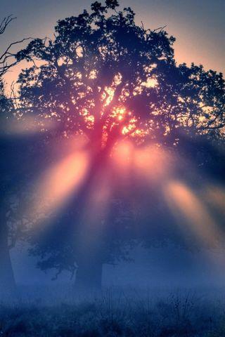Foggy-Sunrise-Nature