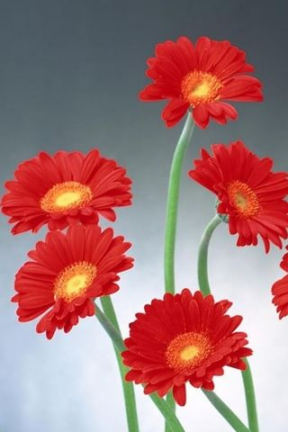 Червона квітка