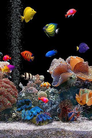 Live-Aquarium