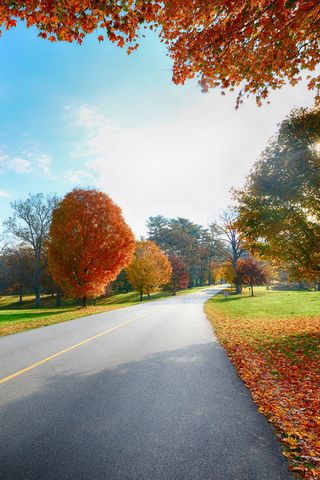Autumn-tree-road-landscape