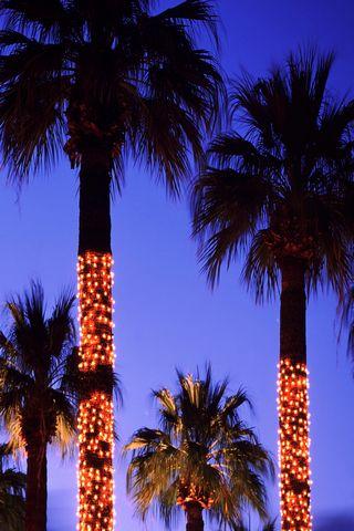 TREE LIGHT's