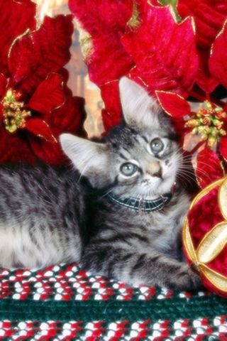 Christmas-kitten-in-red-flowers