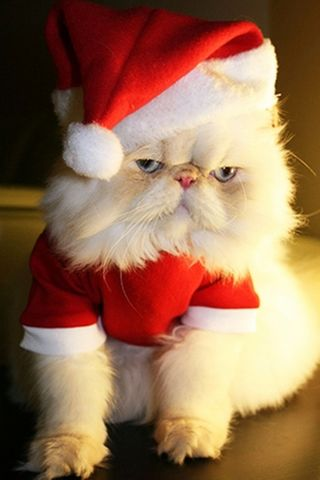 Funny Christmas Cute Cat