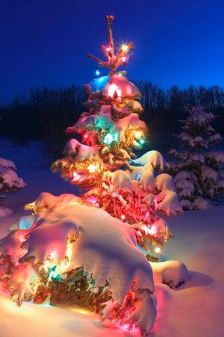 عيد الميلاد شجرة