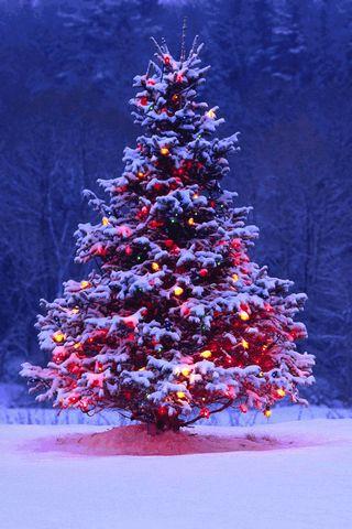 Christas Tree 3