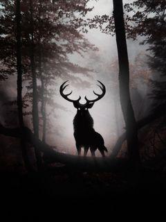 Hirsch Im Dunklen Wald Hintergrund Lade Auf Dein Handy Von Phoneky Herunter