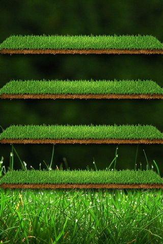 Green Grass-shelf