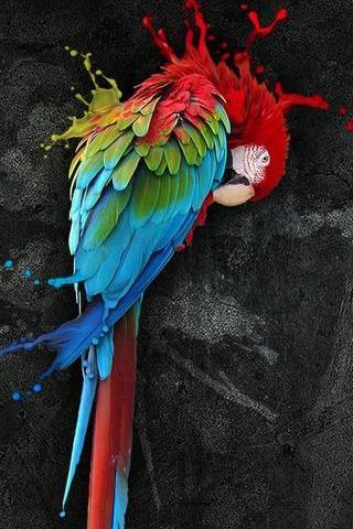 Deads Parrots