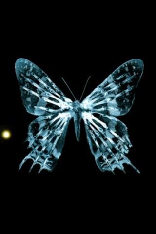 Butterfly-fringe