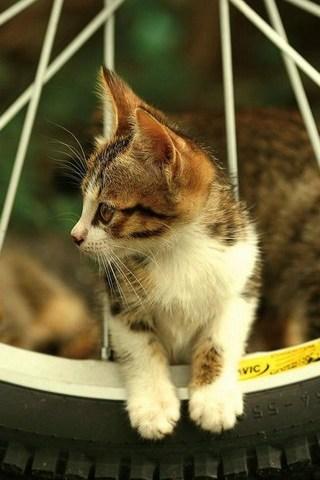 Cantik-Kucing
