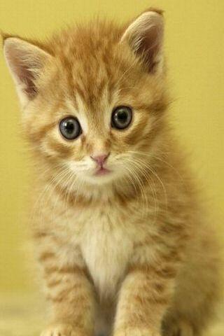 Cute Cat Looking Funny