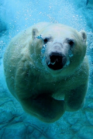 ध्रुवीय अस्वल