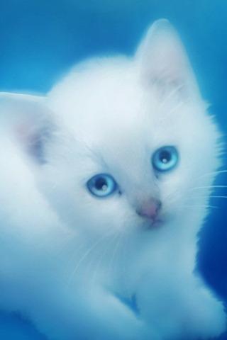 সুন্দর হোয়াইট Kitten