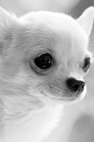 Adorable Animal