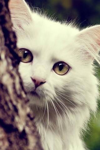하얀 고양이