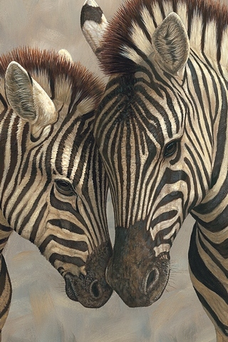 Mother And Baby Zebras
