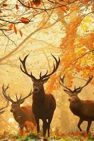 Forest Elf Elk