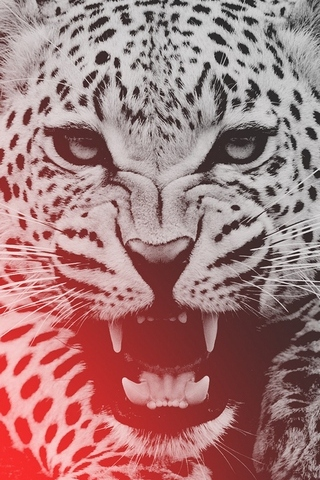 Wild-leopard