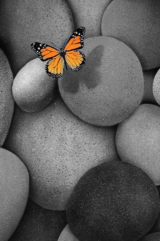 Butterfly On The Rocks
