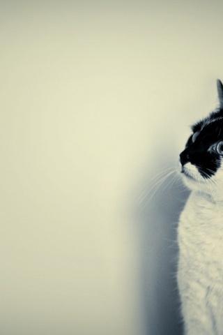 แมวดำน่ารัก