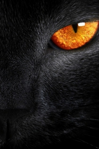 I5 Black Tiger Eye Hd Wallpaper Download To Your Mobile From Phoneky