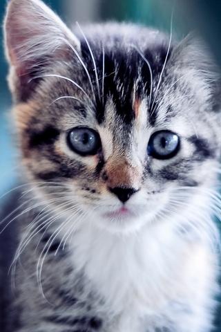Cute-Kitten-i