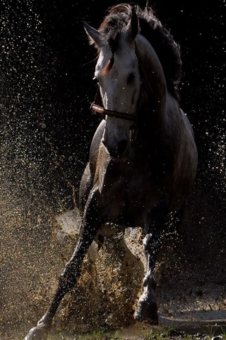 Kuda Cantik
