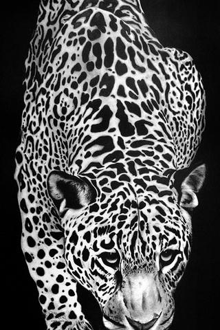 Leopard liar