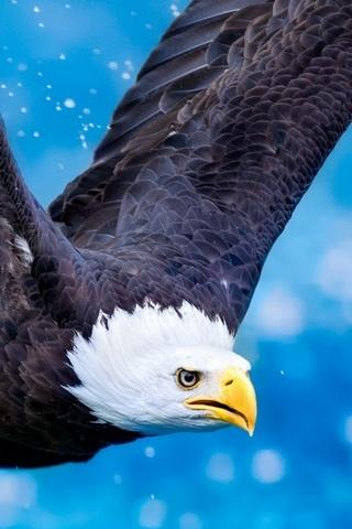 Winston Eagle