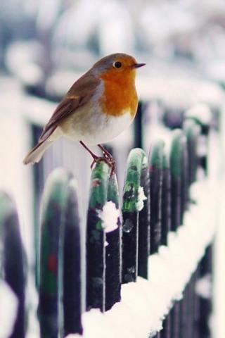 Snow Fence Bird Winter