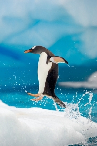 Penguin Jumping