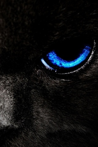 Black Cat Blue Eye
