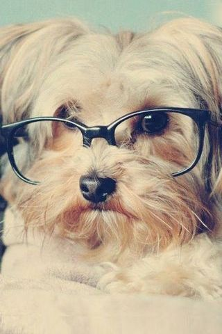 Cute Lomo Vintage Pup