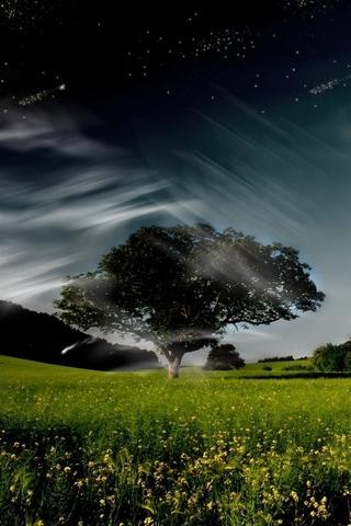 Tree Arts