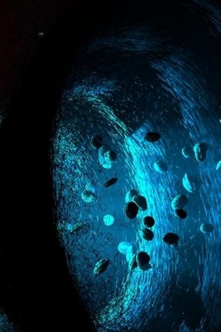 Asteroids VS Black Hole
