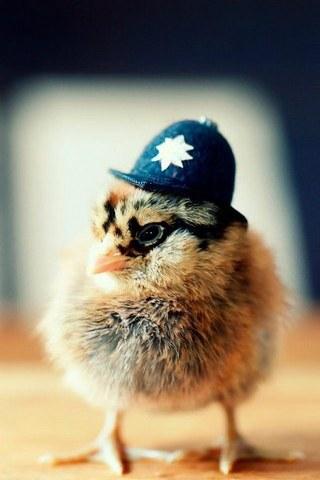 पुलिस चिकन