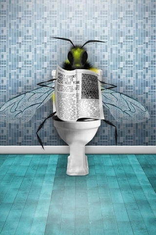 Fly On The Loo