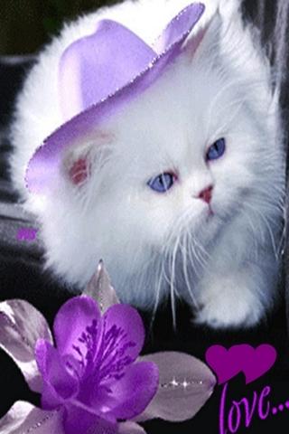 Love Kitty