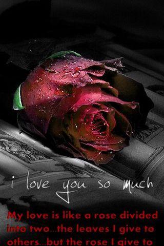 널 너무나도 사랑해